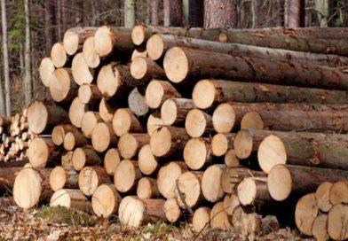 Кто в лес? Кто по дрова?