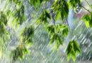 Дождь и гроза: о погоде в Алтайском крае 18 июня