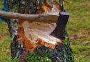 Три сосны и четыре берёзы: житель Алтайского края спилил деревья на 100 тысяч рублей